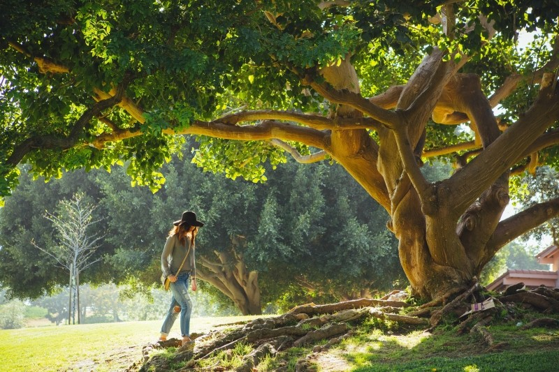 young-woman-wearing-hat-walking-towards-old-tree-in-summer